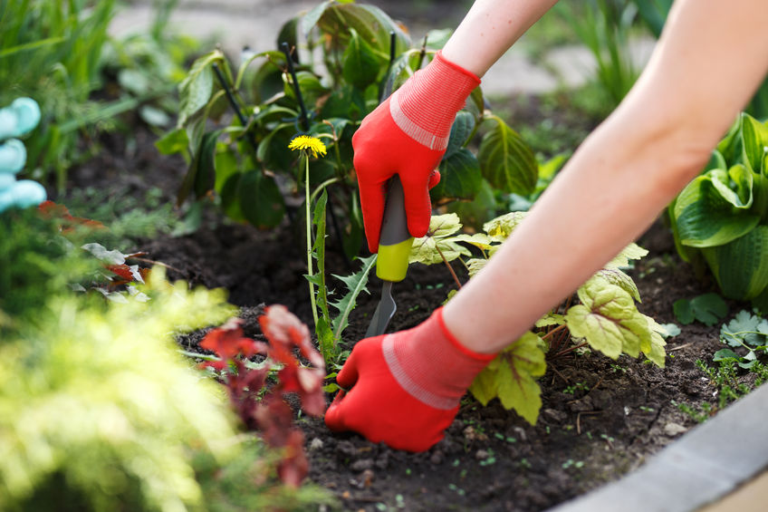 Try these tips to prepare your Chattanooga garden for spring.